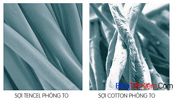 so-sanh-soi-tencel-vs-cotton-phong-to